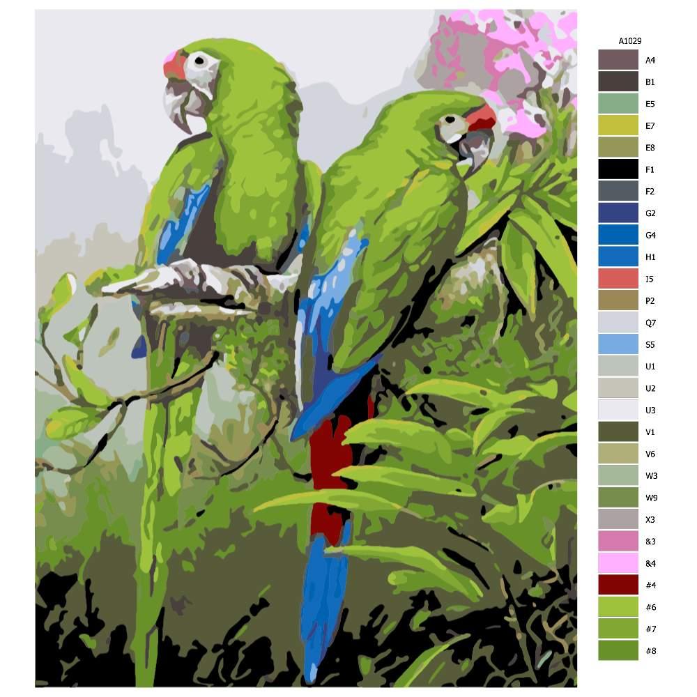 Návod pro malování podle čísel Krásní papoušci