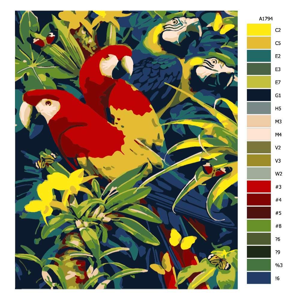 Návod pro malování podle čísel Pestrobarevní papoušci