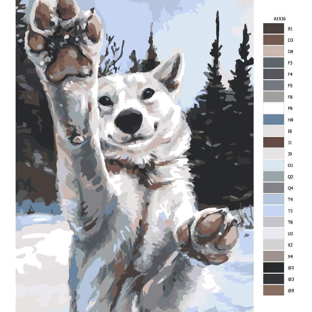 Návod pro malování podle čísel Tlapy vlka